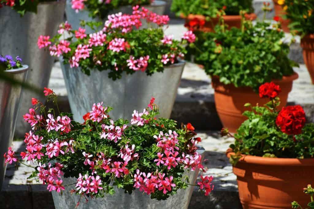 the best self-watering planters