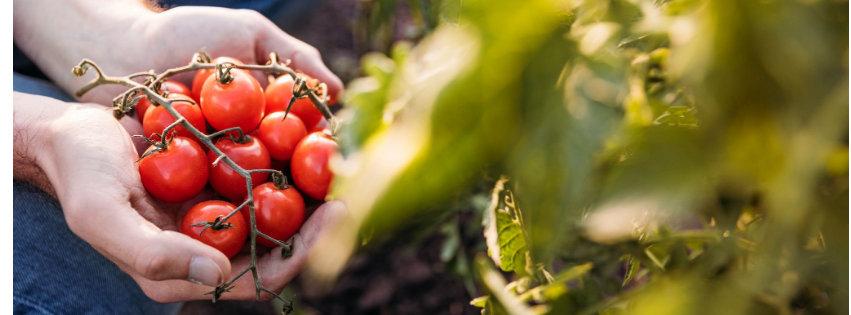 Your Amazing Year-Round Vegetable Garden Plan