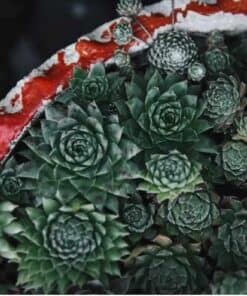 7 Tips for How to Keep Succulents Alive in Winter Indoors